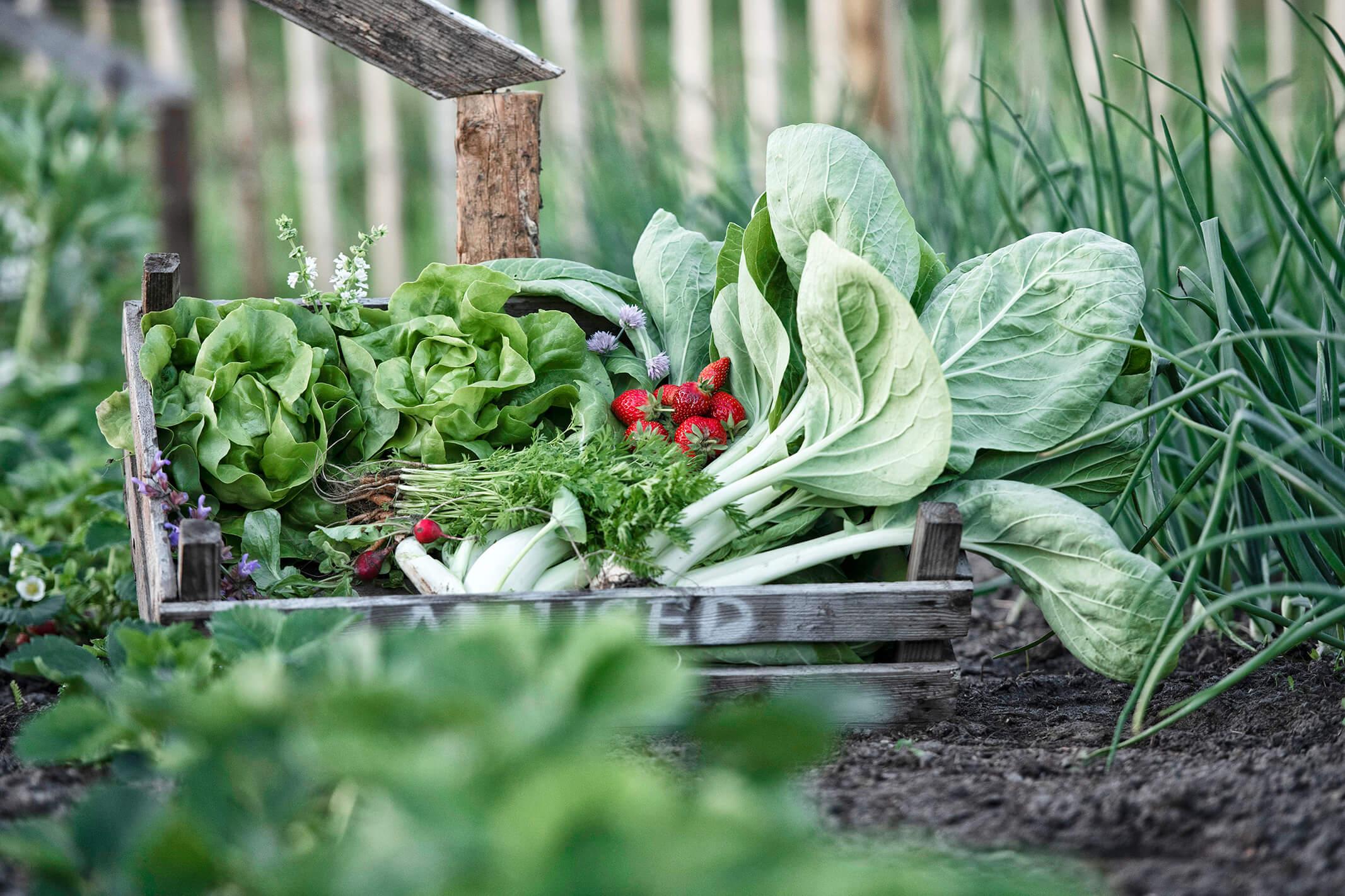 fotografie voor horeca amused biologische groentes