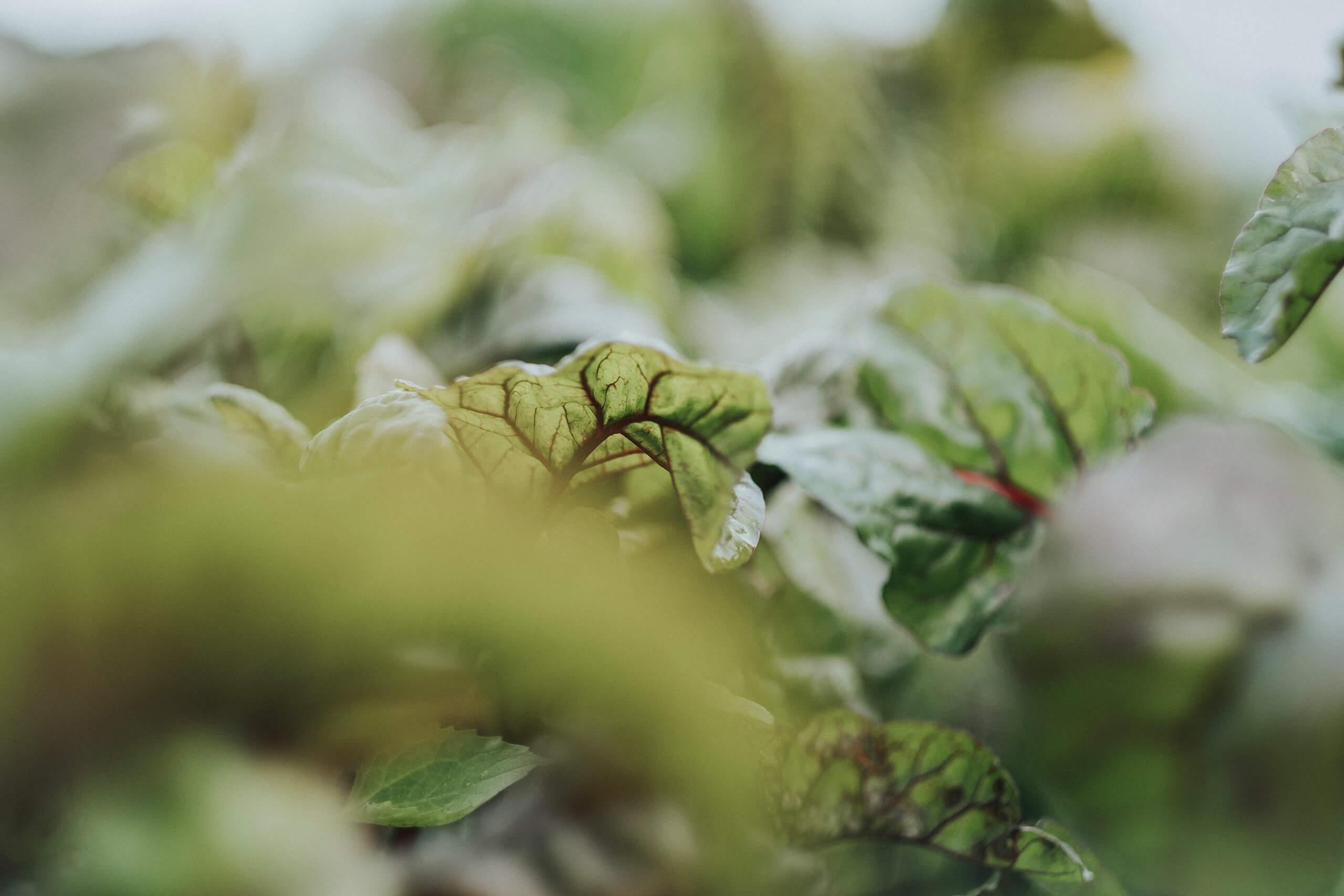 biologisch groente fotografie